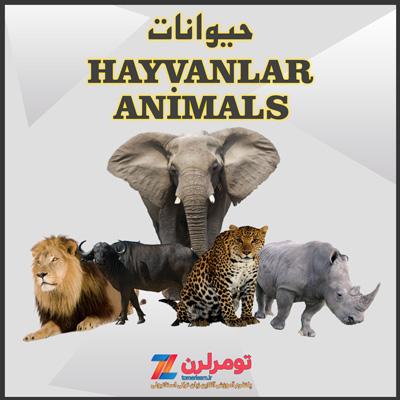 اسامی حیوانات در ترکی استانبولی و انگلیسی