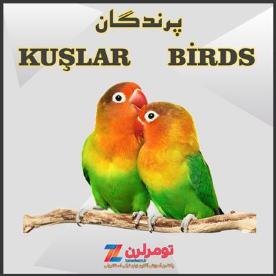 اسامی پرندگان در ترکی استانبولی و انگلیسی