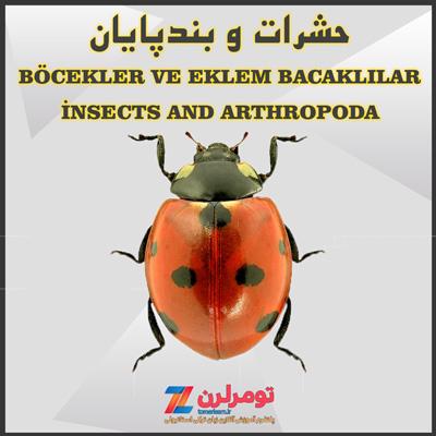 اسامی حشرات و بندپایان در ترکی استانبولی و انگلیسی