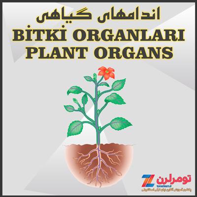 اسامی اندامهای گیاهی در ترکی استانبولی و انگلیسی