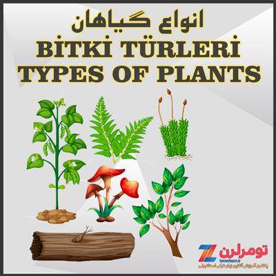اسامی انواع گیاهان در ترکی استانبولی و انگلیسی